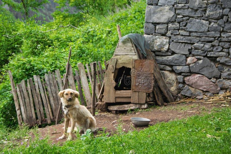Perro guardián y su casa foto de archivo