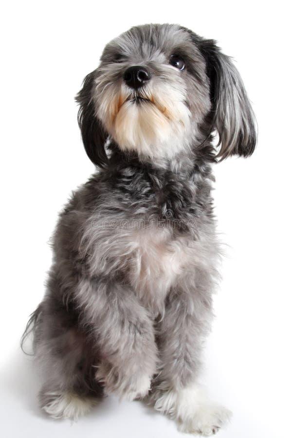 Perro híbrido agradable imagenes de archivo
