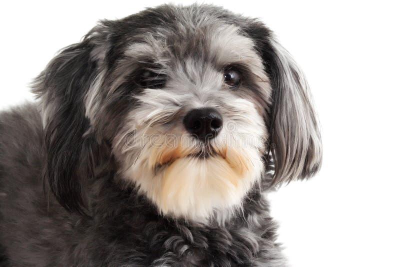 Perro híbrido agradable fotografía de archivo libre de regalías