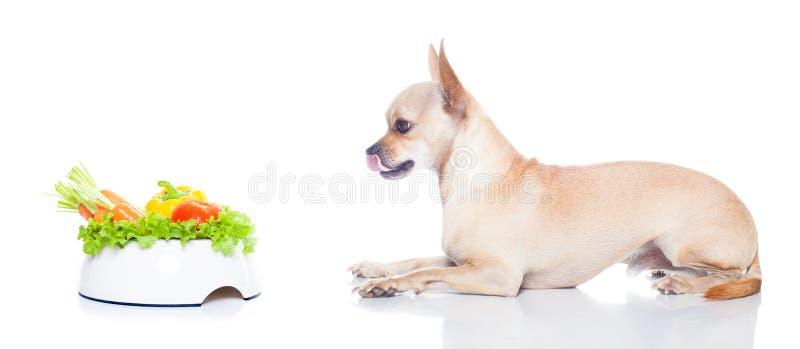 Perro hambriento con el cuenco fotografía de archivo libre de regalías