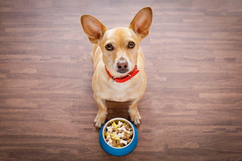 Perro hambriento con el cuenco de la comida fotografía de archivo