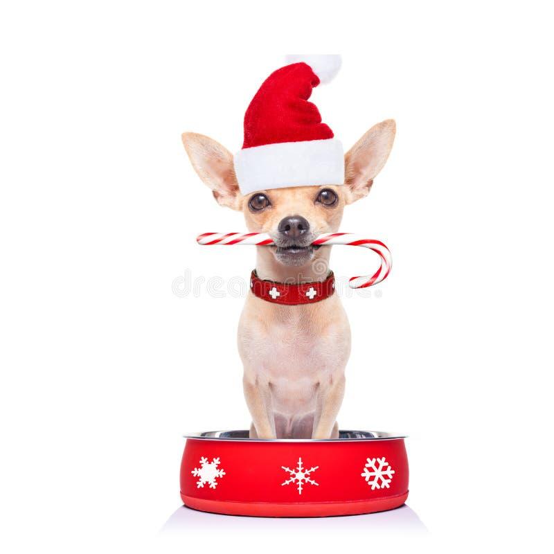 Perro hambriento de Papá Noel dentro del cuenco de la comida fotografía de archivo
