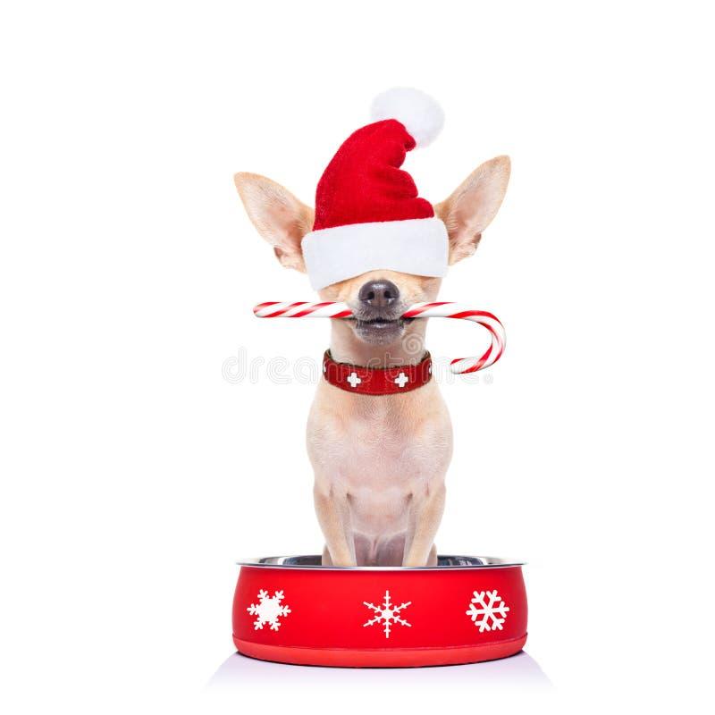 Perro hambriento de Papá Noel dentro del cuenco de la comida foto de archivo libre de regalías