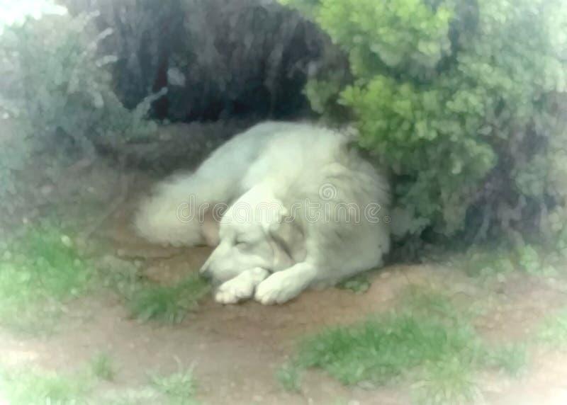 Perro hermoso del dormilón foto de archivo