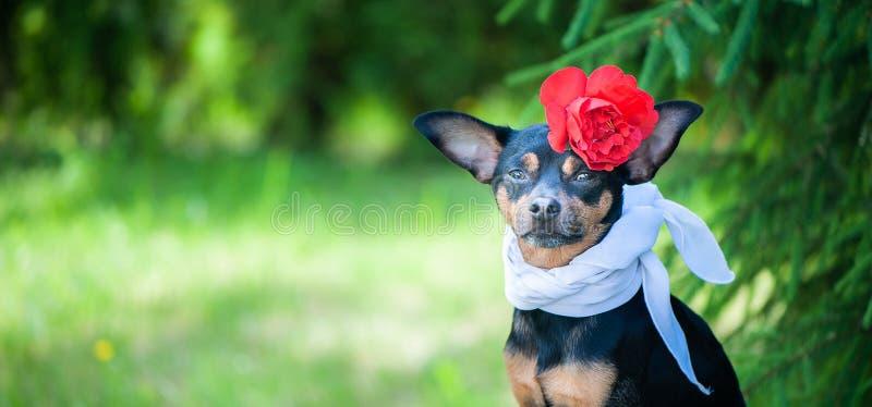 Perro hermoso, un perrito en a en una guirnalda de la flor que se sienta en una parte posterior foto de archivo libre de regalías