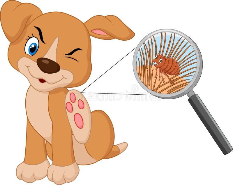 Perro infestado pulga de la historieta ilustración del vector