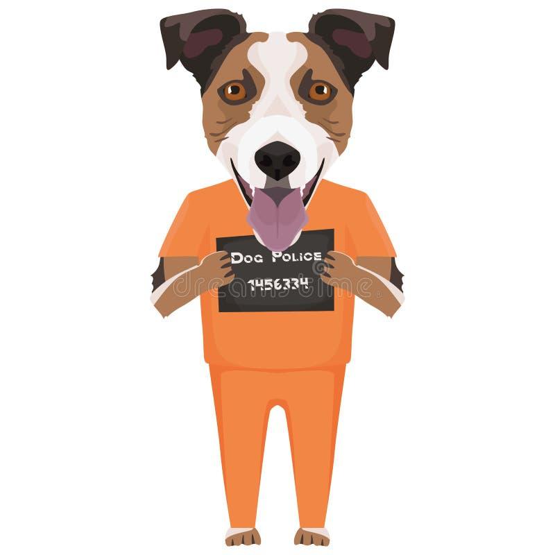 Perro Jack Russell Terrier de la ropa de la prisi?n del Mugshot libre illustration