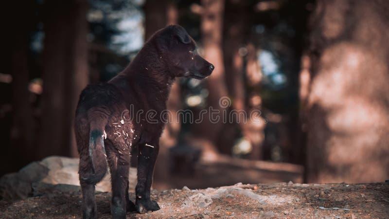 Perro joven lindo de Brown fotografía de archivo libre de regalías