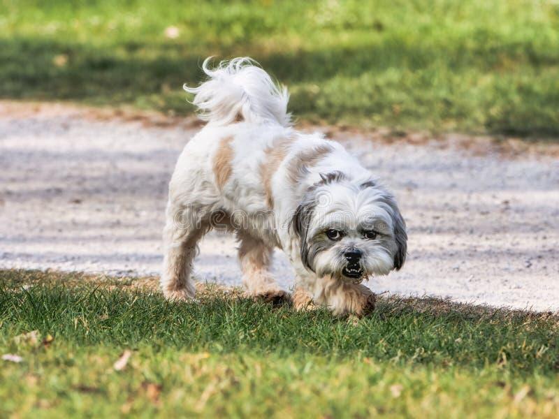 Perro joven que camina en el parque en un día soleado fotos de archivo libres de regalías