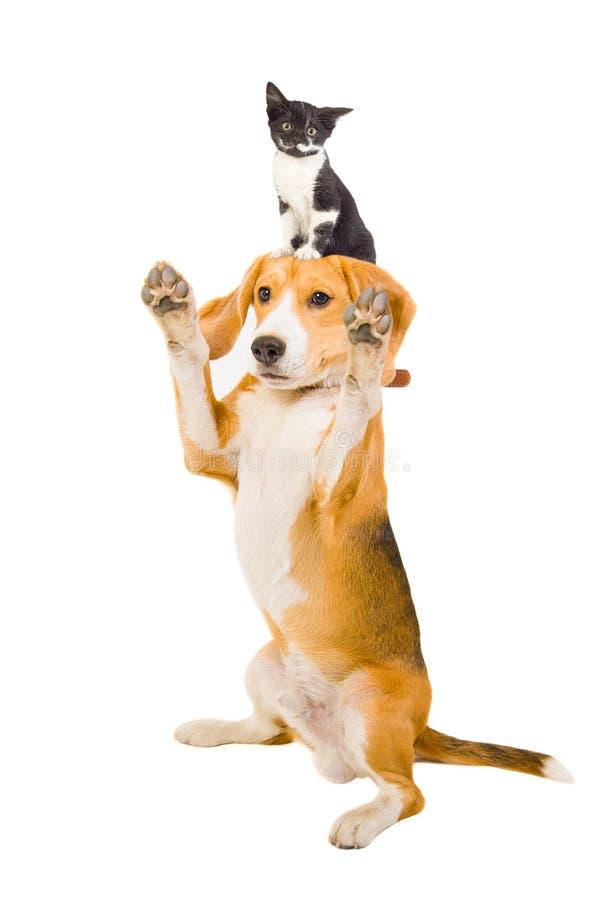 Perro juguetón con un gatito imagenes de archivo