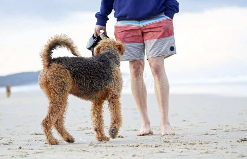 Perro juguetón grande que juega con su dueño del hombre en la playa australiana imponente fotos de archivo libres de regalías