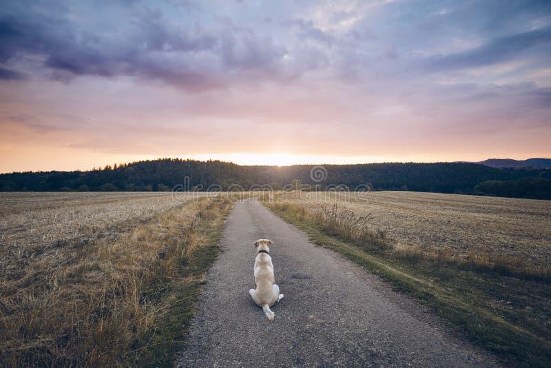 Perro leal que espera en la puesta del sol foto de archivo libre de regalías