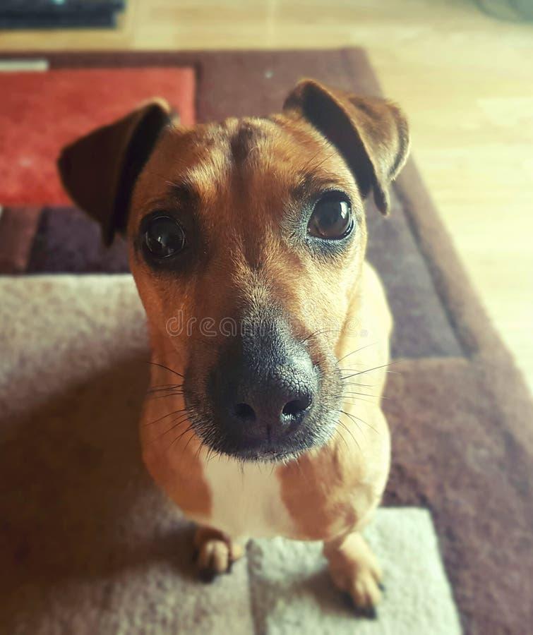 Perro lindo foto de archivo libre de regalías