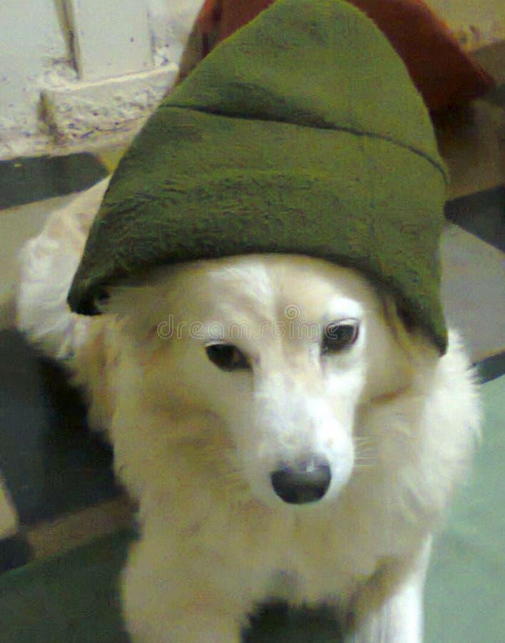 Perro lindo fotografía de archivo