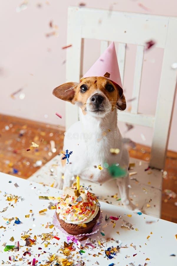 Perro lindo con un sombrero del partido que celebra su perro del birthdayCute con un sombrero del partido que celebra su cumpleañ foto de archivo