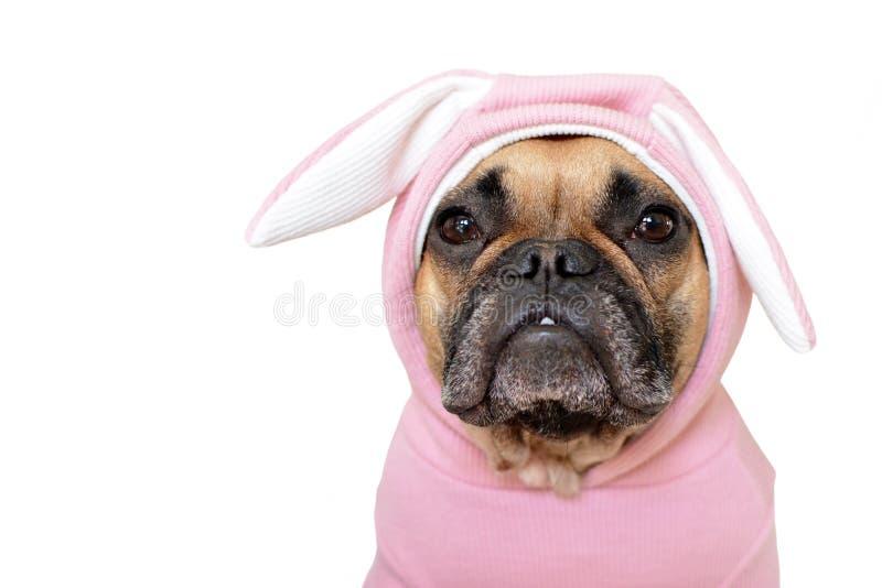 Perro lindo del dogo francés en traje rosado del conejito de pascua imagenes de archivo