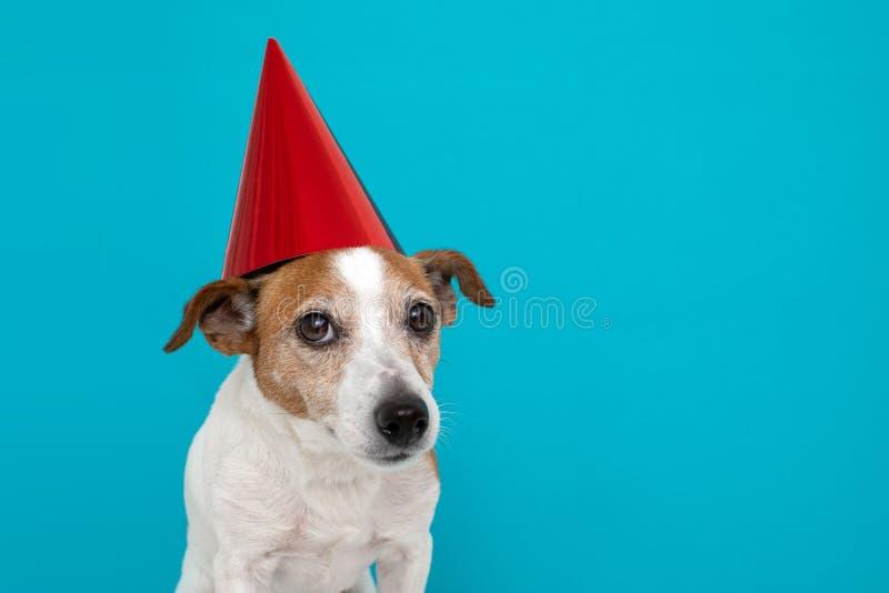 Perro lindo en el sombrero rojo del partido dise?ado imagenes de archivo