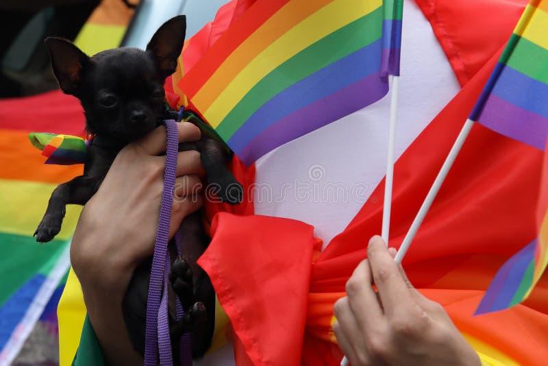 Perro lindo en la mano del dueño envuelta en bandera del arco iris LGBT y pequeñas banderas en otra mano Desfile de orgullo celeb imagenes de archivo