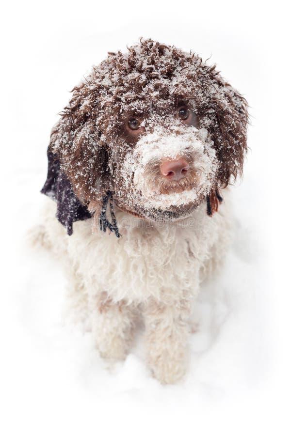 Perro lindo en nieve fotografía de archivo