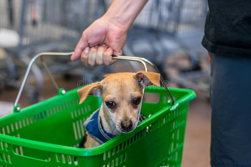 Perro lindo en una cesta fotos de archivo