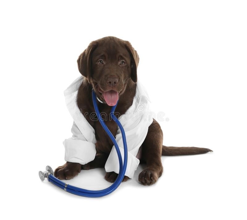 Perro lindo en uniforme con el estetoscopio como veterinario en blanco imagenes de archivo