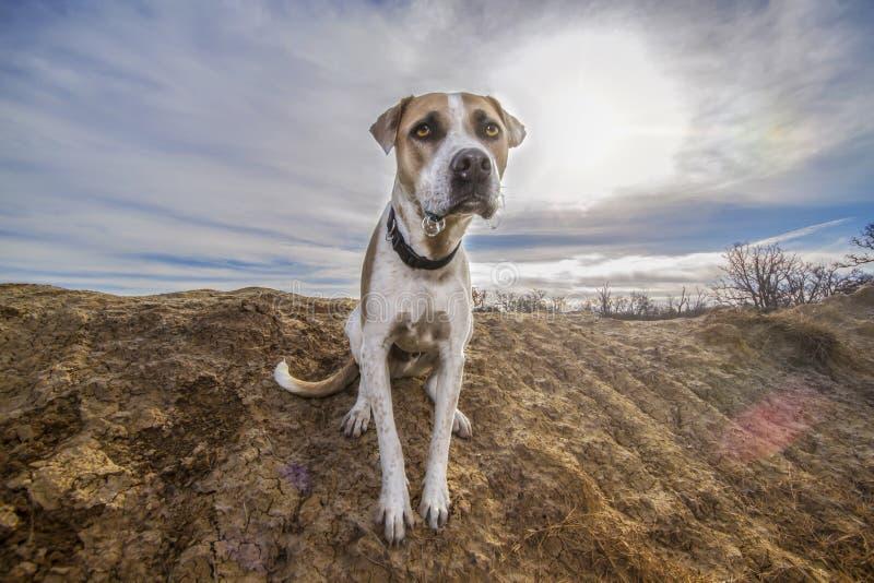 Perro lindo Mondo del rescate en un rancho de Tejas fotografía de archivo