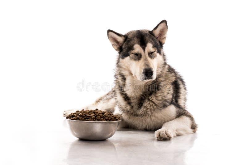 Perro lindo y su comida seca preferida en un fondo blanco imagen de archivo