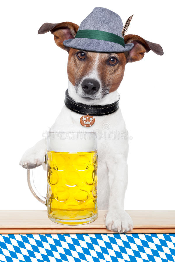 Perro más oktoberfest imagen de archivo libre de regalías