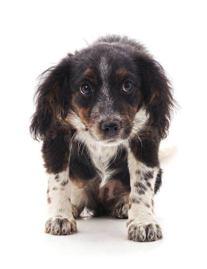 Perro marrón lanudo fotografía de archivo libre de regalías