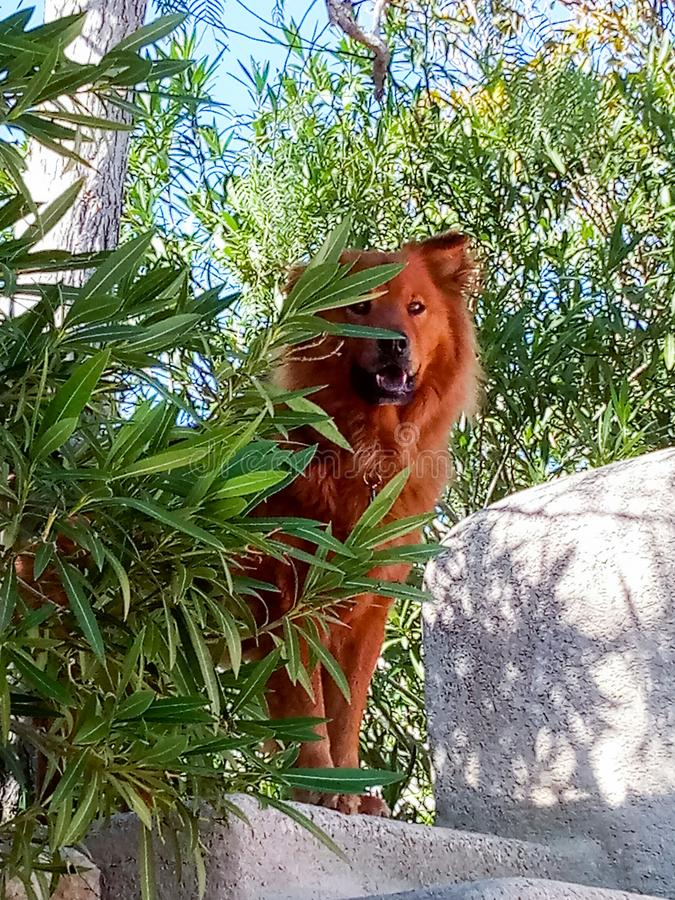 Perro mestizo en las alturas foto de archivo