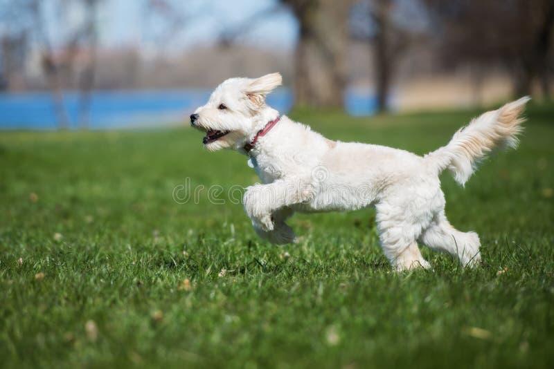 Perro mezclado adorable de la raza que corre al aire libre imagenes de archivo