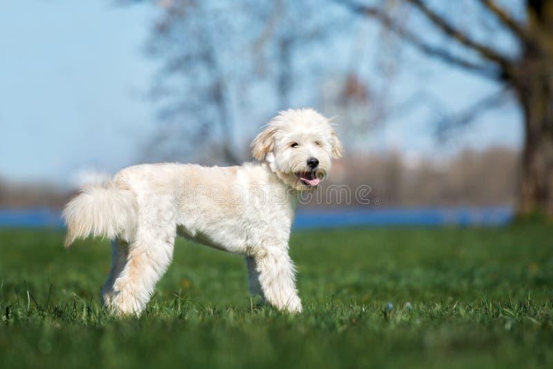 Perro mezclado adorable de la raza que presenta al aire libre foto de archivo