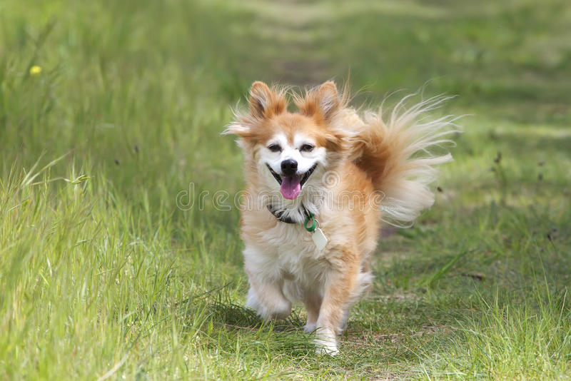 Perro mezclado de la casta en el camino imagen de archivo libre de regalías