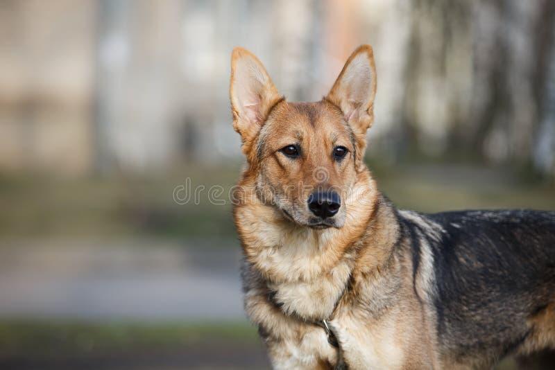Perro mezclado de la raza en naturaleza imagen de archivo