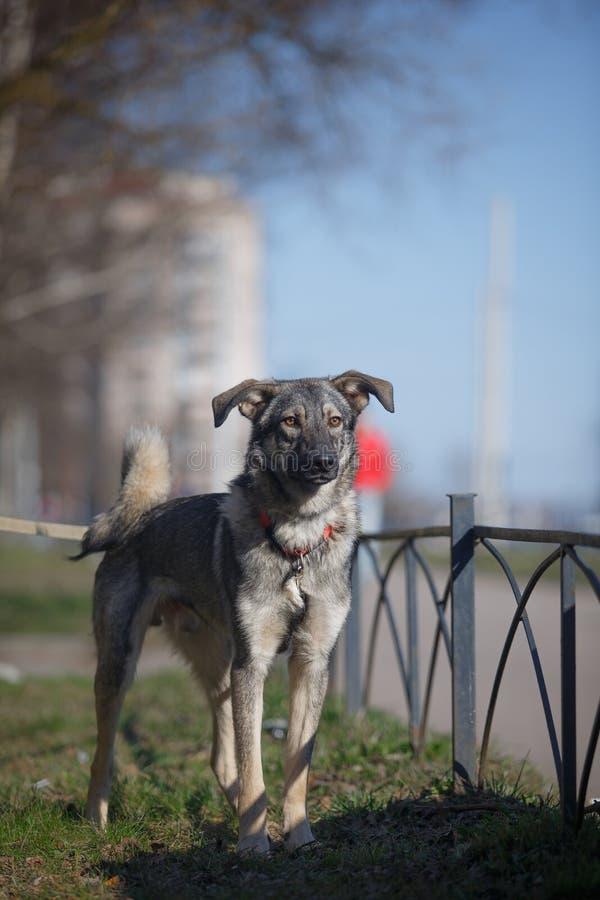 Perro mezclado de la raza en naturaleza foto de archivo libre de regalías