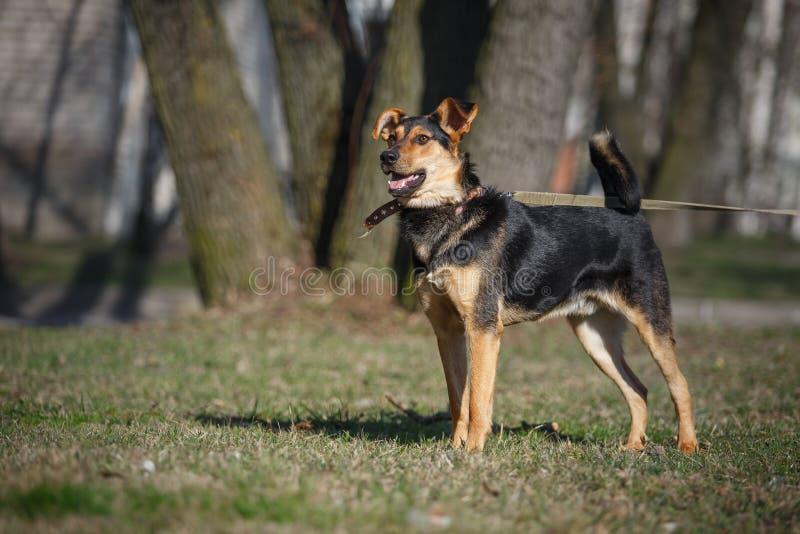 Perro mezclado de la raza en naturaleza imagenes de archivo