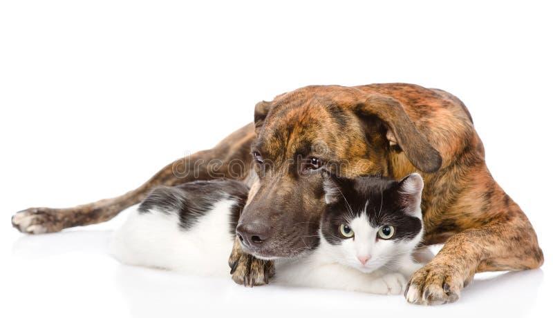 Perro mezclado de la raza que abraza un gato Aislado en el fondo blanco imagen de archivo libre de regalías