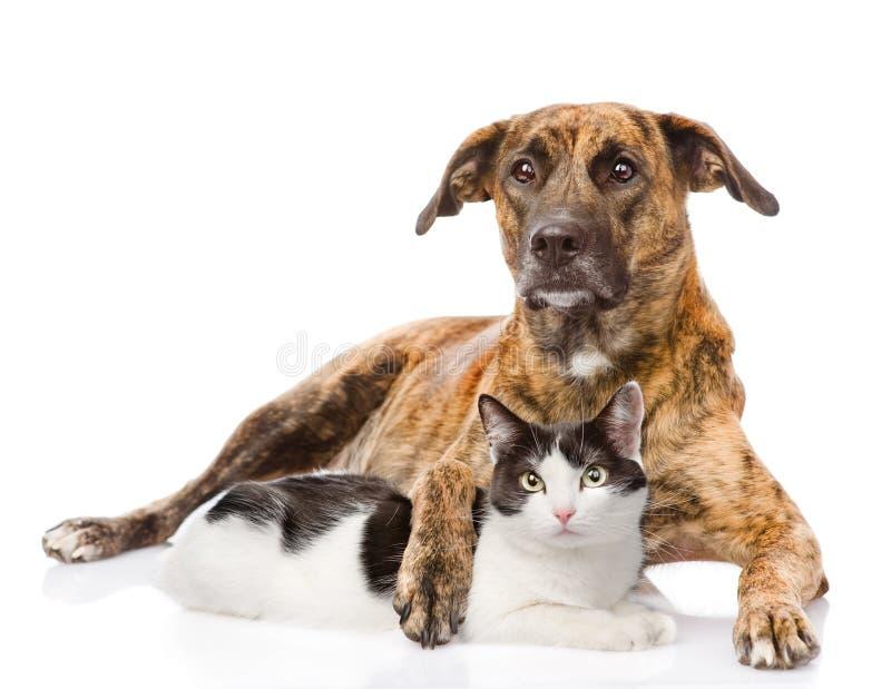 Perro mezclado de la raza que abraza un gato Aislado en el fondo blanco imagenes de archivo