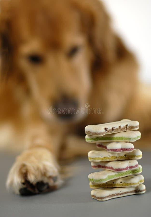 Perro, mirando sus galletas imagen de archivo libre de regalías
