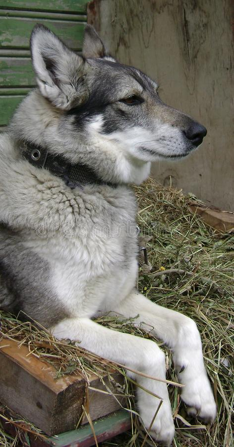 Perro-muchacha orgullosa foto de archivo