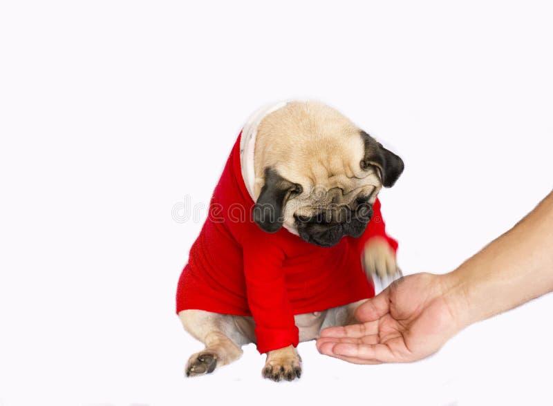 Perro muy lindo del barro amasado que se sienta en un vestido rojo del ` s del Año Nuevo Donante de la mano fotos de archivo libres de regalías