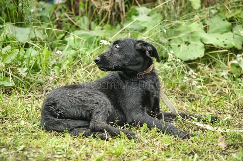 perro negro culpable triste infeliz fotos de archivo