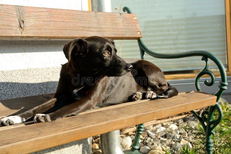 Perro negro en banco de parque imágenes de archivo libres de regalías