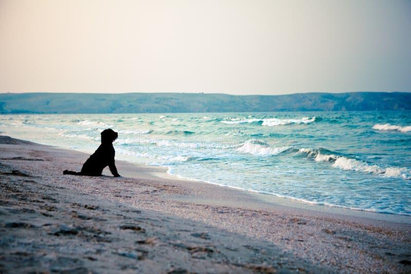 Perro negro en el mar fotografía de archivo