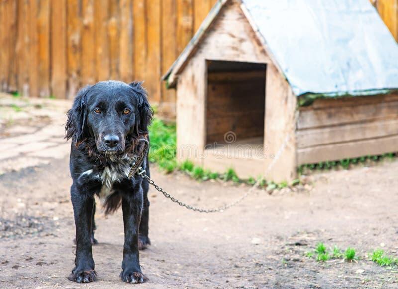 Perro negro en encadenamiento imagenes de archivo
