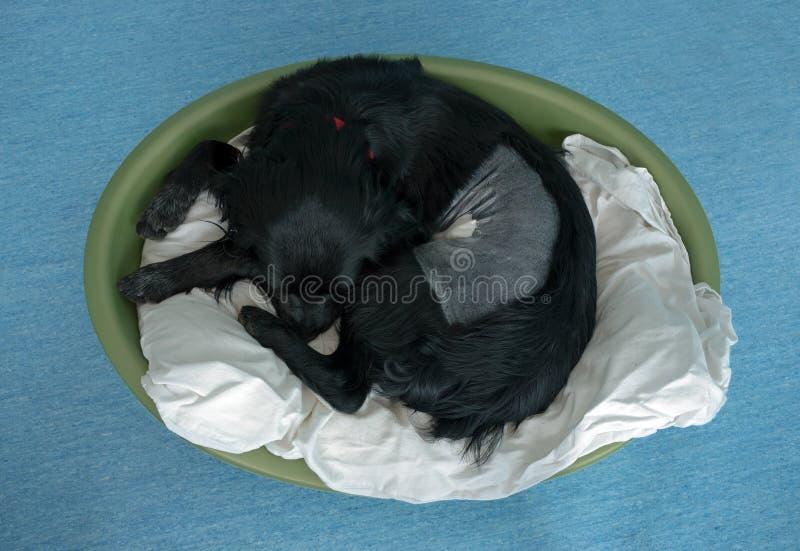 Perro operativo del poste en cesta foto de archivo libre de regalías