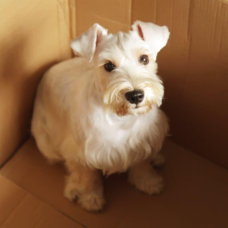 Perro para la venta fotos de archivo