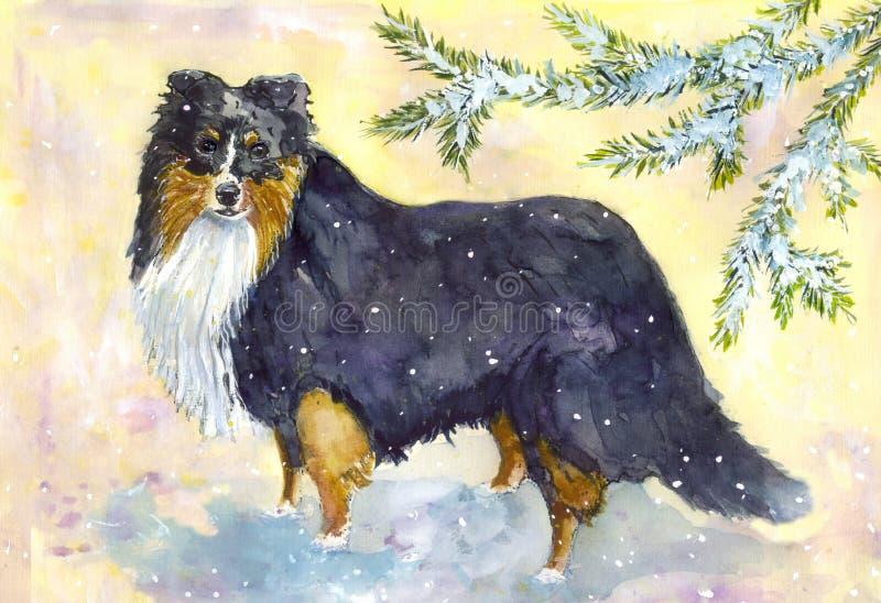 Perro pastor de Shetland fotos de archivo