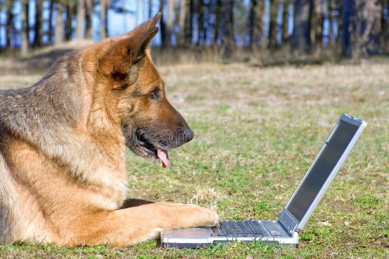 Perro pastor que pone en la hierba con la computadora portátil imagenes de archivo