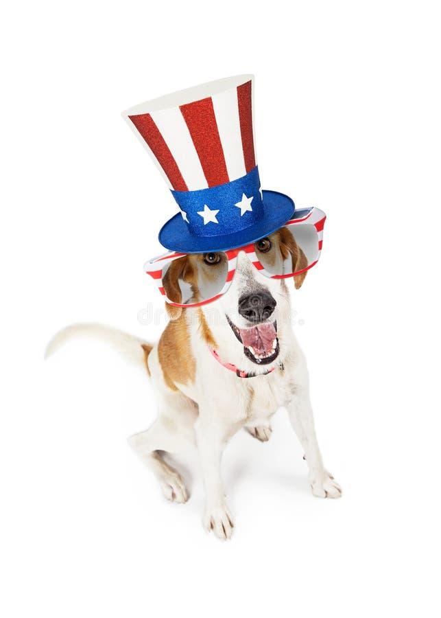 Perro patriótico americano divertido foto de archivo